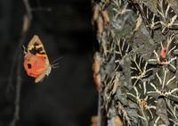 Долина бабочек (о. Родос)